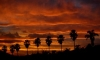 "sunset palms • <a style=""font-size:0.8em;"" href=""http://www.flickr.com/photos/55355744@N06/5133121204/"" target=""_blank"">View on Flickr</a>"