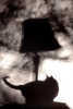 "cat:lamp sillouette • <a style=""font-size:0.8em;"" href=""http://www.flickr.com/photos/55355744@N06/5133118858/"" target=""_blank"">View on Flickr</a>"